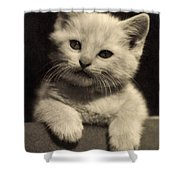 White Fluffy Kitten Shower Curtain