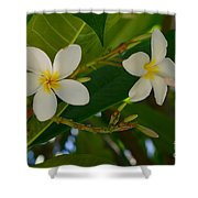 White Frangipani Flowers Shower Curtain
