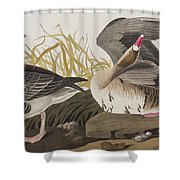 White-fronted Goose Shower Curtain