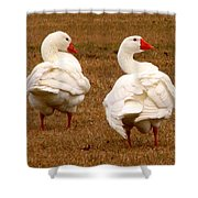 White Geese 1 Shower Curtain