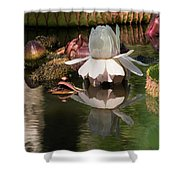 White Giant Water Lily Shower Curtain