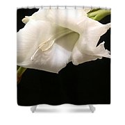 White Gladiolus Shower Curtain