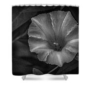 White Glory Shower Curtain