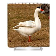 White Goose 2 Shower Curtain