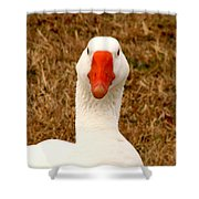 White Goose Close Up 1 Shower Curtain