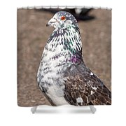 White-gray Pigeon Profile Shower Curtain