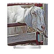 White/grey Goat Head Through Fence 2 6242018 Goat 2420.jpg Shower Curtain