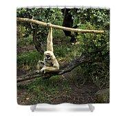 White Handed Gibbon 2 Shower Curtain