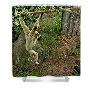 White Handed Gibbon 3 Shower Curtain