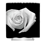 White Heart-shaped Rose Shower Curtain