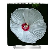 White Hibisci #18 Shower Curtain