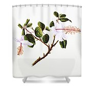White Hibiscus Art Shower Curtain