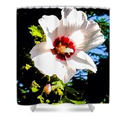 White Hibiscus High Above In Shadows Shower Curtain