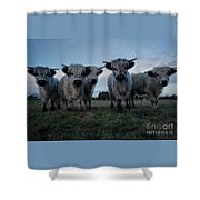 White High Park Cow Herd Shower Curtain