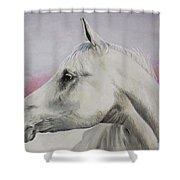 White Horse- Arabian Shower Curtain