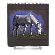 White Horse Grazing Shower Curtain