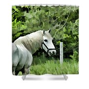White Horse In A Green Pasture Shower Curtain