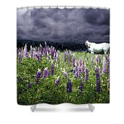 White Horse In A Lupine Storm Shower Curtain