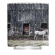 White Horse In A Snowstorm  Shower Curtain