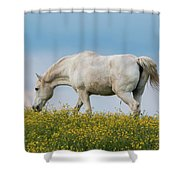 White Horse Of Cataloochee Ranch 2 - May 30 2017 Shower Curtain by D K Wall