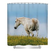 White Horse Of Cataloochee Ranch - May 30 2017 Shower Curtain by D K Wall