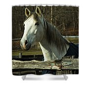 White Horse Shower Curtain