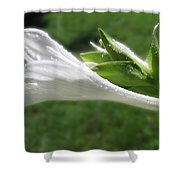 White Hosta Flower 46 Shower Curtain