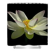 White Hot And Graceful Shower Curtain