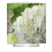 White Hydrangea At Rainy Garden In June, Japan Shower Curtain