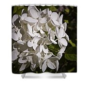 White Hydrangea Bloom Shower Curtain