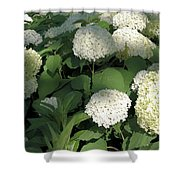 White Hydrangea Bush Shower Curtain