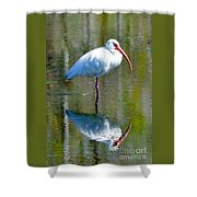 White Ibis And Reflection Shower Curtain