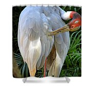 White Ibis At The Zoo Shower Curtain