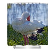 White Ibis Dries Off Shower Curtain