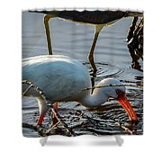 White Ibis Eating Shower Curtain