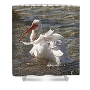White Ibis In Florida Shower Curtain