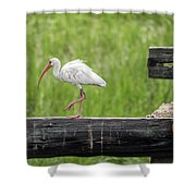 White Ibis Stepping Out Shower Curtain