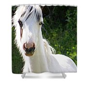 White Indian Pony Shower Curtain