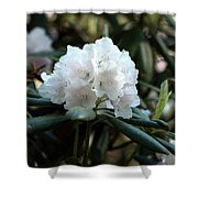 White Inflorence Of  Rhododendron Plant Shower Curtain