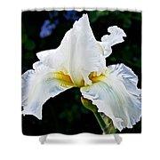 White Iris At Pilgrim Place In Claremont-california Shower Curtain