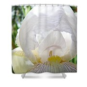 White Iris Flower Art Print Sunlit Irises Baslee Troutman Shower Curtain
