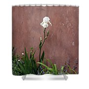 White Iris In New Mexico Shower Curtain