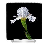 White Iris On Black Background Shower Curtain