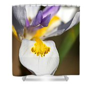 White Iris One Shower Curtain