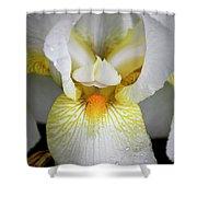 White Iris Study No 1 Shower Curtain