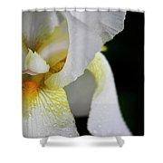 White Iris Study No 3 Shower Curtain