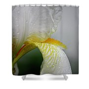 White Iris Study No 6 Shower Curtain