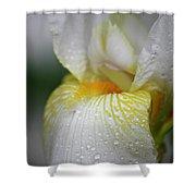 White Iris Study No 7 Shower Curtain by Teresa Mucha