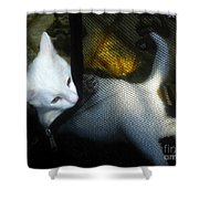 White Kitten Shower Curtain
