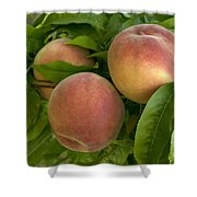 White Lady Peaches On A Branch Shower Curtain